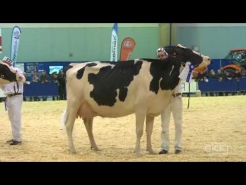 Embedded thumbnail for Suprême Laitier 2017 - 4 ans – Holstein